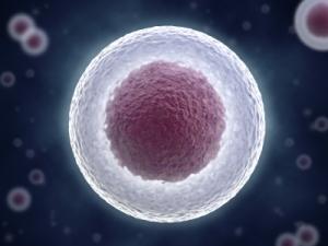 Les cellules souches